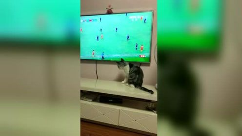 为中国足球着急的喵星人!这接球姿势不错!