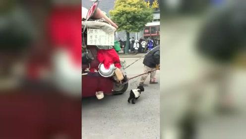 真的是大开眼界呀,一人一狗闯天涯,真的是服了呀!