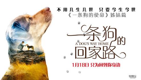 """《一条狗的回家路》""""即刻启程""""版预告 贝拉冒险回家诠释""""一眼万年"""""""