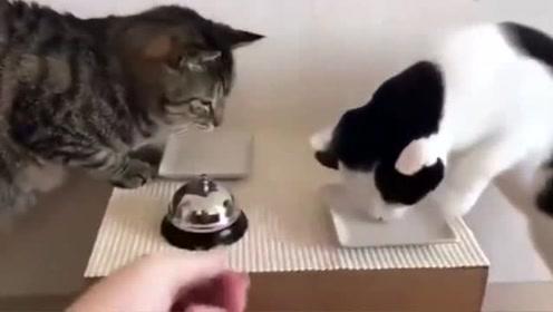 喵星人:不是说一摁铃就有吃的吗,都摁成这样了,你倒是给我啊!