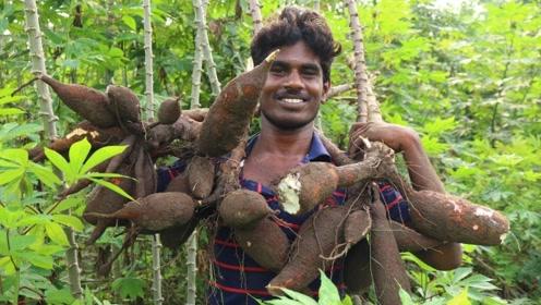 印度村民改善伙食,从山上弄来奇怪的食物,看看他们是什么吃法