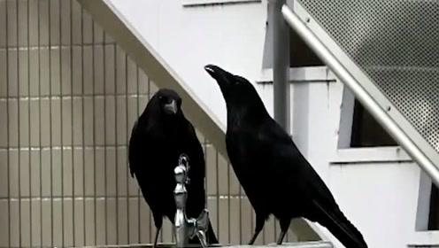 新版乌鸦喝水!不仅能开水龙头 还可以调节水量大小洗澡