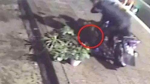 男子骑摩托偷草莓盆栽 全程被监控拍下
