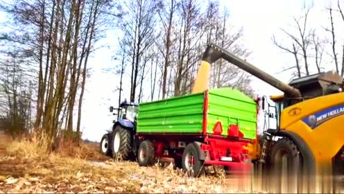 实拍新款6行玉米收割机,这效率你能打几分