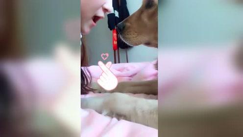 狗:唉呀妈呀,好清香的大蒜味,我得好好闻闻