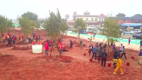 栽种新绿_扮靓家园