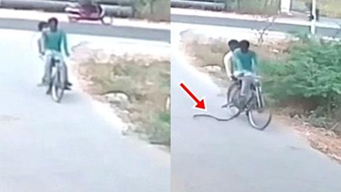 印度两男子骑车路遇眼镜蛇袭击 吓得扔下自行车就跑