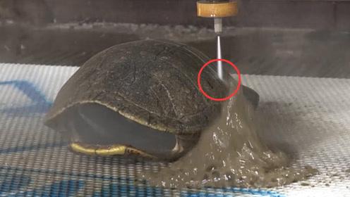 """乌龟壳为什么那么硬?老外用""""高压水刀""""切开龟壳,发现惊人秘密"""