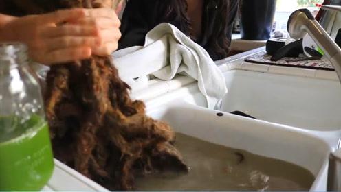 脏辫到底有多脏?洗头发的水堪比印度护城河,看完之后表示要远离