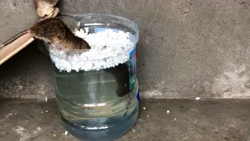太厉害了,农村老头仅用一桶水,把老鼠治的服服帖贴