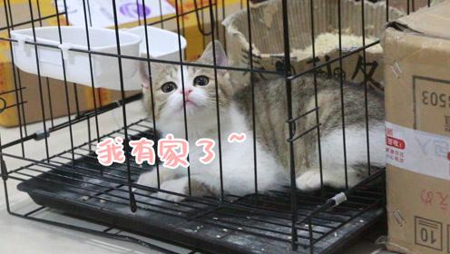 喂养三代流浪猫,仅剩最后一只,套近乎两个月将其掳回!