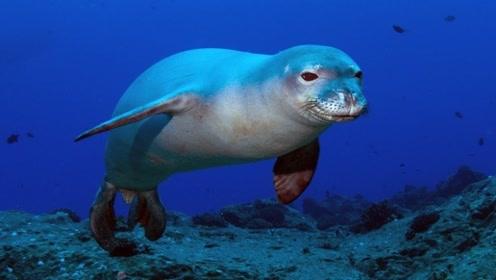 海豹遇到了沙丁鱼群,疯狂的冲了上去,网友:仿佛到了天堂