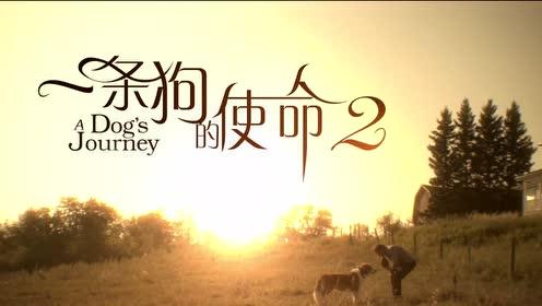 《一条狗的使命2》最治愈正片片段 暖心故事掀周末合家观影热
