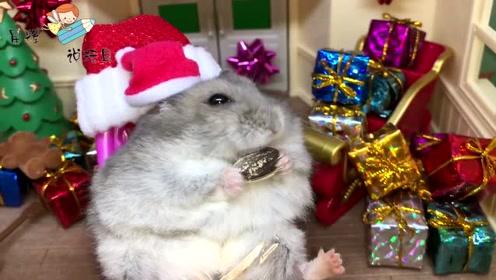 为了给小仓鼠过六一儿童节,主人准备了好多礼物!