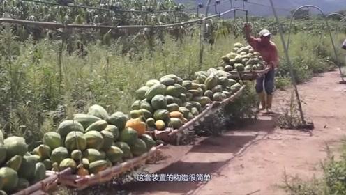 50岁大叔发明水果运输装置,不用油不用电,一次性运输2吨水果