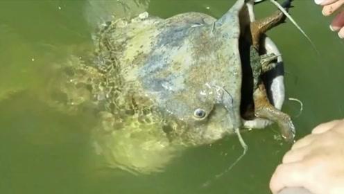 死去鲶鱼嘴里有什么奇怪东西,老外将其拖上船,想不到居然是它