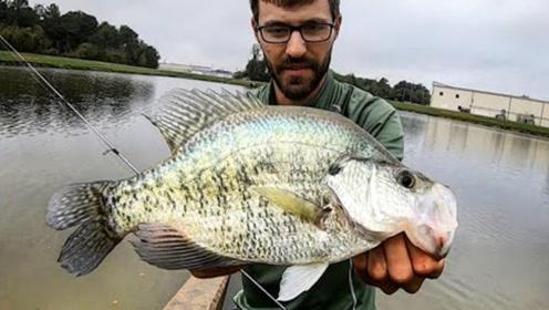 这鱼还挺难钓,在一英尺深的水中抓着巨大的垃圾,鱼也挺顽强