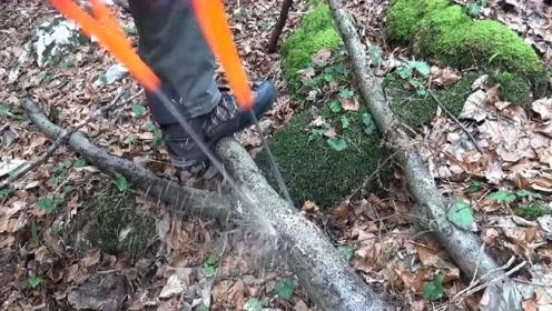 """大学生发明新型""""锯木""""神器,不耗油不耗电,12秒锯断一棵树!"""