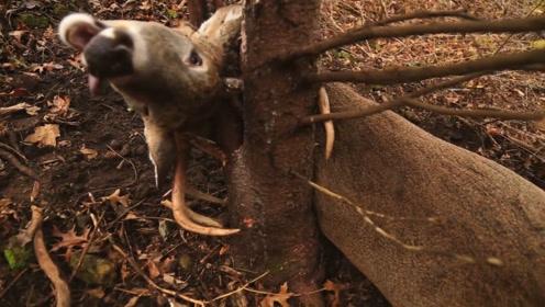 男子野外发现一头鹿,正想出手相救,却来不及了