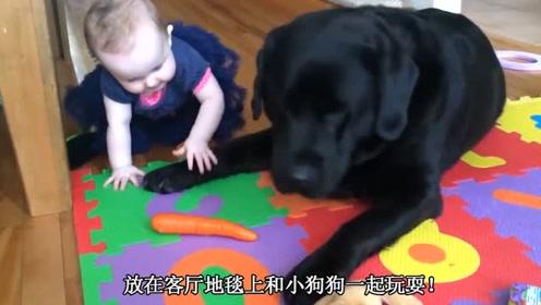 宝宝在客厅和狗狗一起玩,笑惨了,宝宝往狗狗嘴巴里塞矿泉水瓶