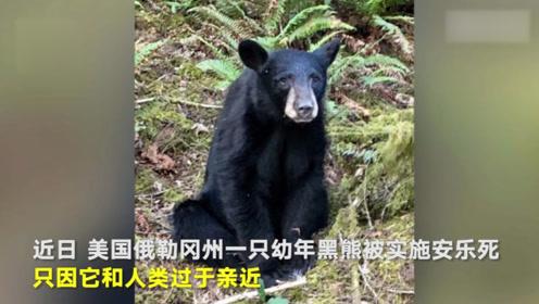 美国一黑熊被安乐死,只因它与人类过于亲近