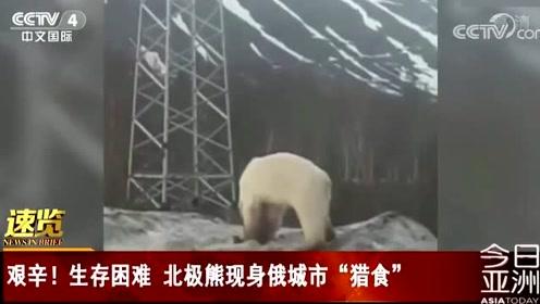"""艰辛!生存困难 北极熊现身俄城市""""猎食"""""""