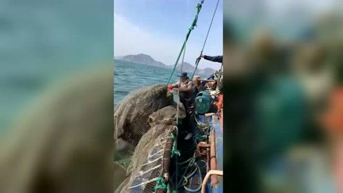 大海捕捞,一网上千斤啊,渔夫用的网子真是够结实的!