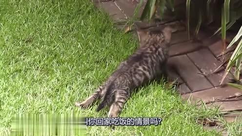 """猫妈妈的另类版""""叫你回家吃饭了"""",不走我就叼着走!"""