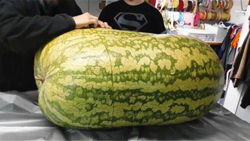 老外斥资重金买下260斤的大西瓜,切开的一刹那,全场人愣了