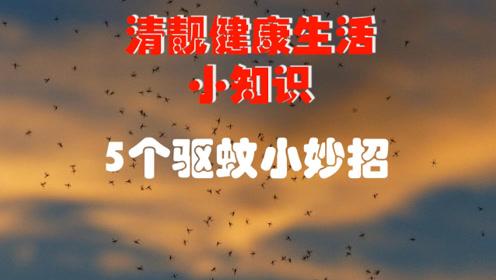 防治蚊虫的5个天然小妙招:既简单又高效,让你夏天一夜了无蚊