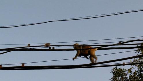 危险!猴子在电线杆上被烧出火花,网友:太让人担心了