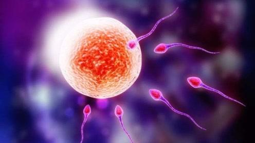 """女人排卵""""受精""""过程大揭秘,到底有多复杂?看完热血沸腾!"""