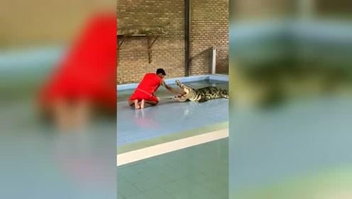 鳄鱼:一顿饭够吃,和一辈子够吃,我还是分得清的!