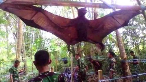"""小伙森林中抓到""""翼龙"""",专家鉴定后脸色大变:赶快放生"""