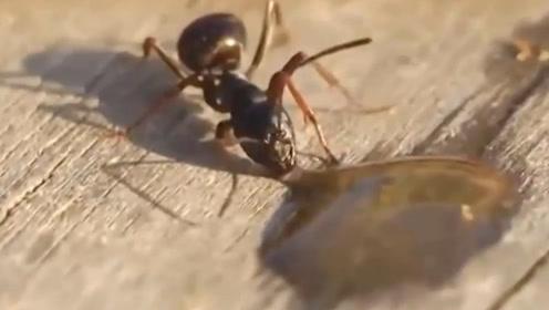 当蚂蚁遇上酒会发生怎样奇妙的故事呢?镜头正好记录下了这一幕