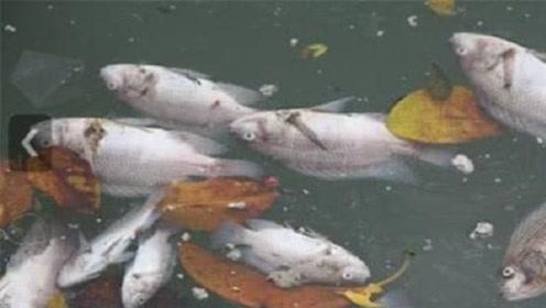 鱼也是会被淹死的?想要淹死一条鱼,方法其实很简单