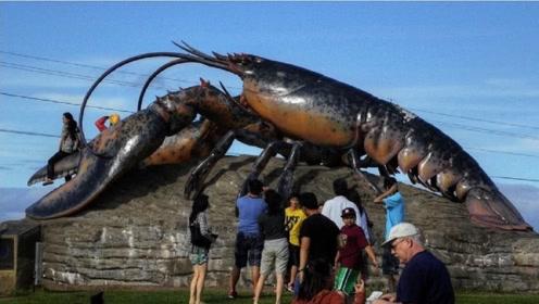 """世界上首只获得了""""免死金牌""""的龙虾,让吃货们望尘莫及"""