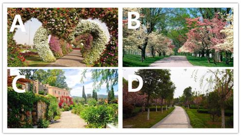 心理测试:你想在哪条道路上散步?测你是不是个乐观的人