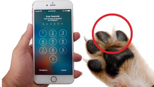 动物指纹解锁手机?脑洞大开个刺猬录指纹,结果意外了