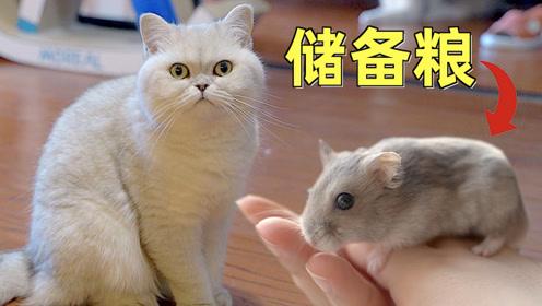 养猫达人首次养仓鼠直呼太麻烦!猫:我帮你吃掉麻烦!