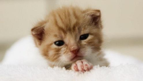 """美国夫妻16万""""复活""""宠物猫,克隆老猫基因,新猫真假难分"""