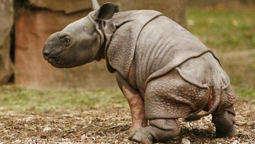 亚洲最危险的动物Top10,第1名体型虽小,却杀伤力最大!