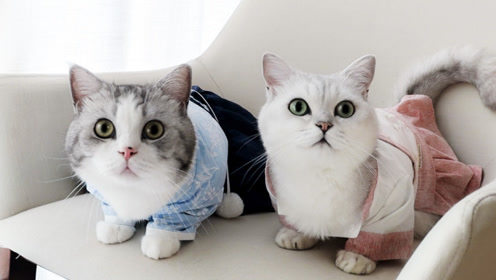 三猫给猫咪们试穿古装 竟然还有神秘礼物?