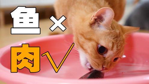 小橘猫第一次见鱼上来就咬了一大口,被鱼甩了个大嘴巴子!