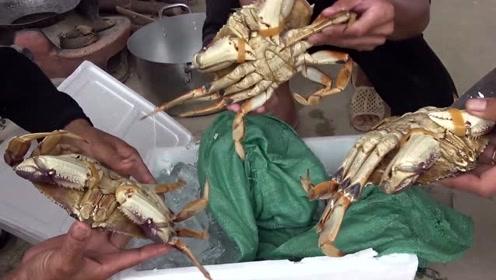 吃螃蟹就要捡大的吃!这么大的螃蟹,一只能不能顶一顿饭?