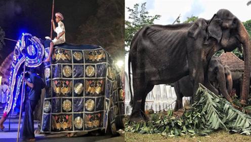 大象游行超壮观 华服掀开众人落泪