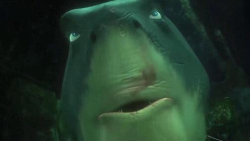 他海中做滴血实验 20分钟后41条鲨鱼包围