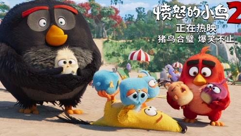 """《愤怒的小鸟2》""""猪鸟大作战""""片段 小小鸟获封""""新晋萌神"""""""