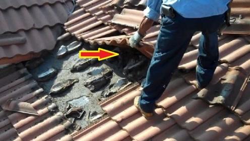 男子拆除10年未住的房屋,一掀开瓦片,几百只动物仓皇出逃!