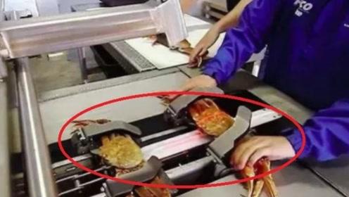 外国人用高科技处理螃蟹,40秒处理一只,中国人:吃的乐趣呢?